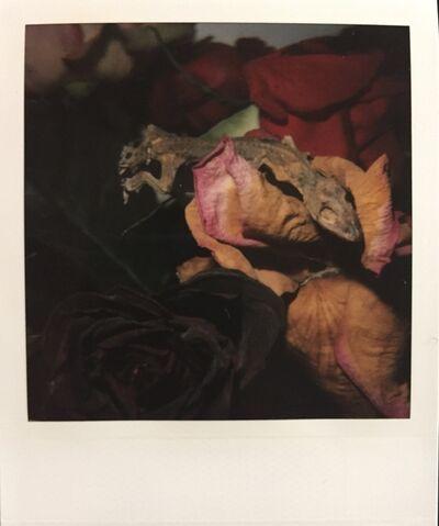 Nobuyoshi Araki, 'Flowers and Jomorinsky', ca. 2005