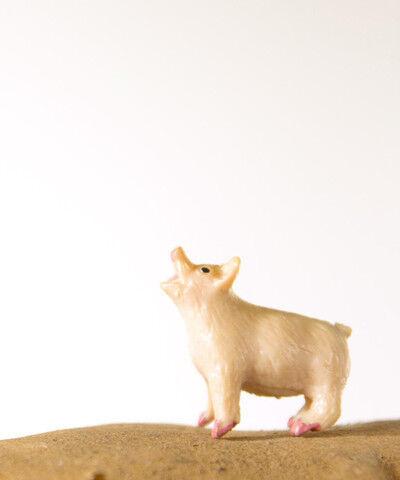 Matthew Carden, 'Potato the Pig'