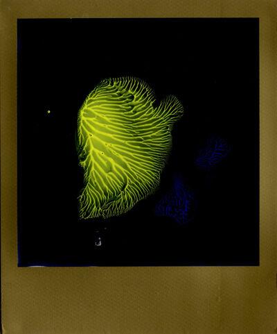 Nobuyoshi Araki, 'painted series', 2012-2015