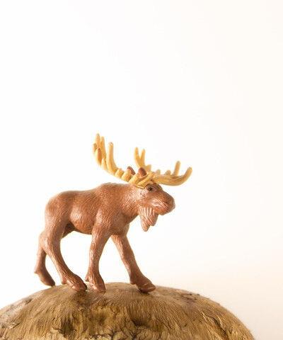 Matthew Carden, 'Mushroom the Moose'