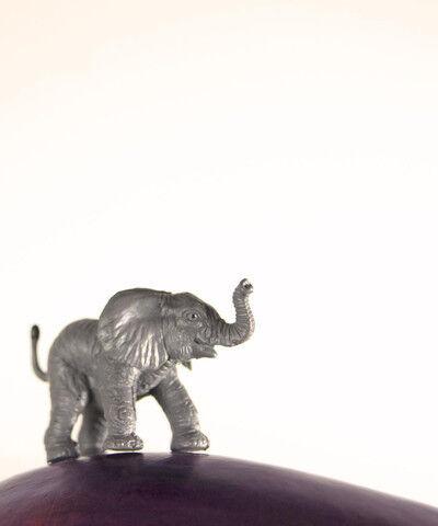 Matthew Carden, 'Eggplant the Elephant'