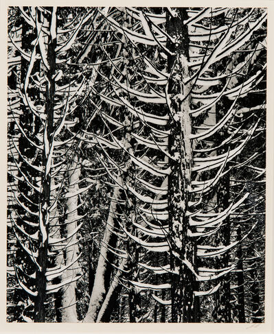 Ansel Adams, 'Forest Detail, Winter', 1949-printed later