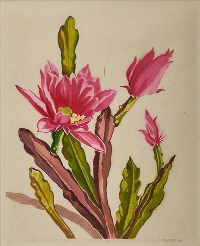 William S. Rice, 'Blooming Cactus, California', ca. 1930