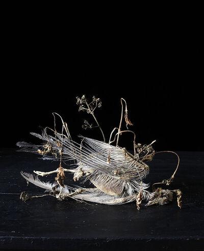 Natacha Nikouline, 'Systema Naturae #5', 2016