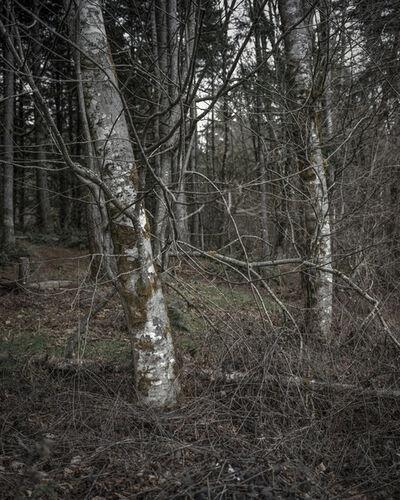 Chris Bennett, 'From the series Darkwood, #6', 2014
