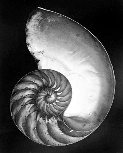 Edward Weston, 'Chambered Nautilus (Shell)', 1927-printed later by Cole Weston