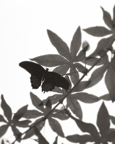 Sal Taylor Kydd, 'The Butterfly House', 2016