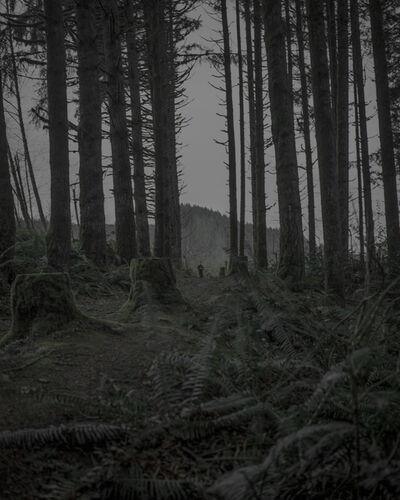 Chris Bennett, 'From the series Darkwood, #19', 2014