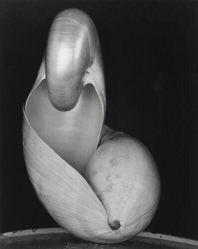 Edward Weston, 'Shell (14S)', 1927