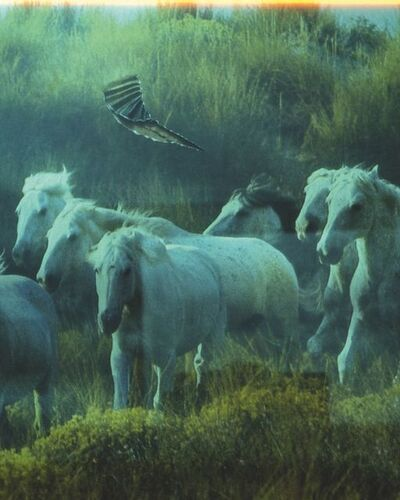 "Seba Kurtis, 'Horses, from the series ""A few days more""', 2008"