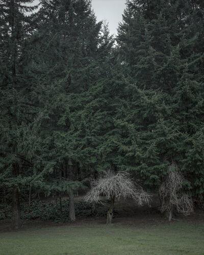 Chris Bennett, 'From the series Darkwood, #14', 2014