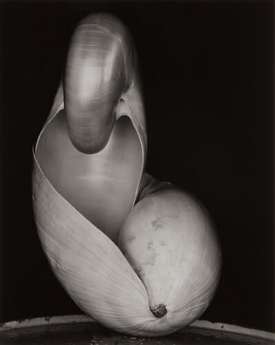 Edward Weston, 'Shell', 1927-printed later by Cole Weston