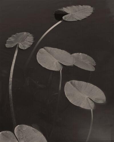 """Koichiro Kurita, '""""Floating Leaves"""" Boundary Water, MN ', 1998"""