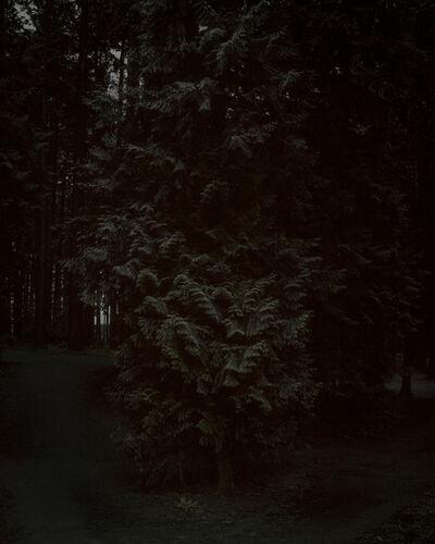 Chris Bennett, 'From the series Darkwood, #24 (Portal)', 2014