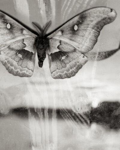 Sal Taylor Kydd, 'Moth at Sunset', 2014