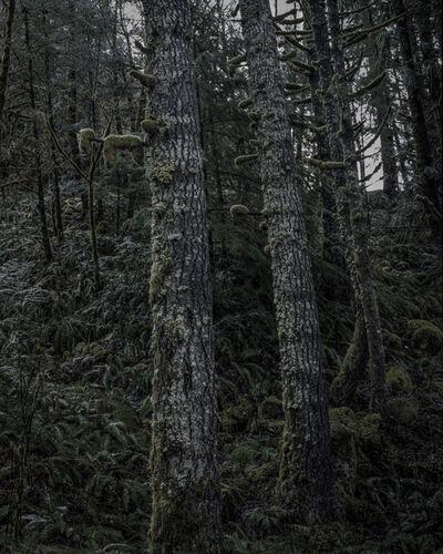 Chris Bennett, 'From the series Darkwood, #11', 2014