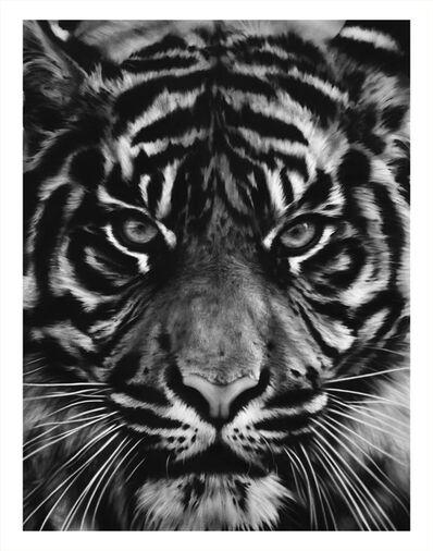 Robert Longo, 'Untitled (Tiger Head 2)', 2014