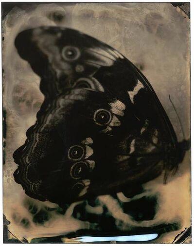 Lara Porzak, 'Tiger Eye', 2018