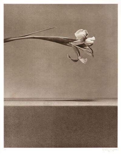 Robert Mapplethorpe, 'Untitled', 1983; published 1984