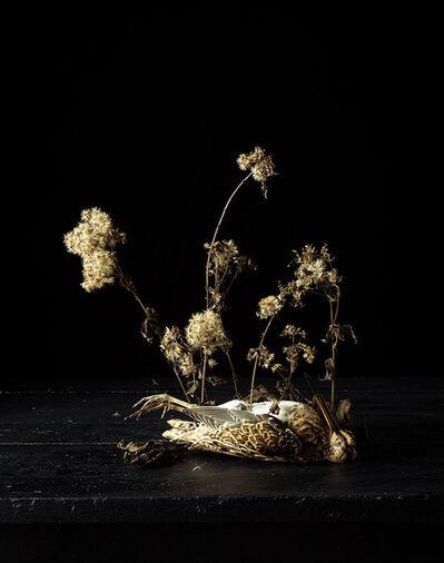 Natacha Nikouline, 'Systema Naturae #1', 2016