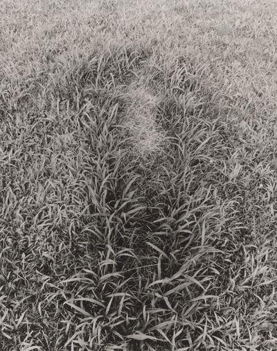 Ana Mendieta, 'Untitled, from the series Silueta Works in Iowa', 1978