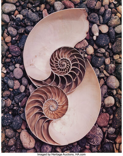 Edward Weston, 'Nautilus Shells', 1947
