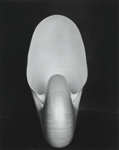 Edward Weston, ''Shell'', 1927