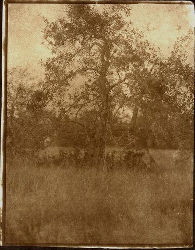 """Koichiro Kurita, '""""Wild Apple"""" Belfast, ME', 2012"""