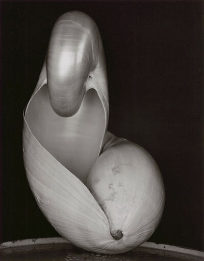 Edward Weston, 'Two Shells (14S)', 1927