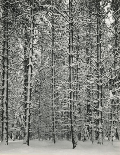 Ansel Adams, 'Trees and Snow', 1933