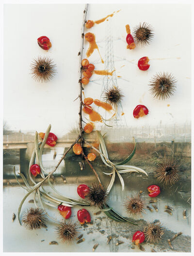 Stephen Gill, 'Untitled, from the series 'Hackney Flowers' ', 2007