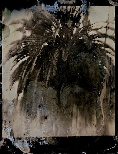 Lara Porzak, 'Laurel Canyon Palm ', 2015