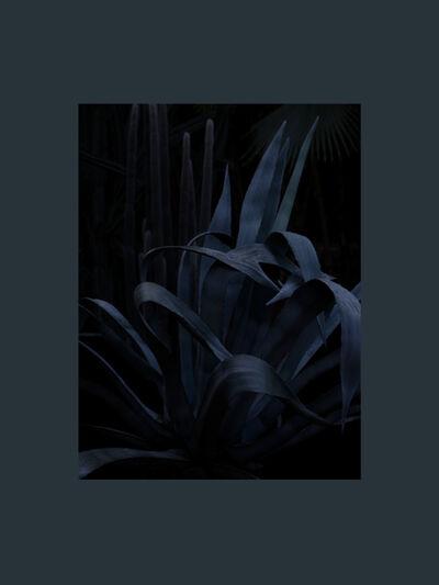 Stephan Crasneanscki, 'Jardin Majorelle, Hommage à Yves Saint Laurent Study 3', 2015
