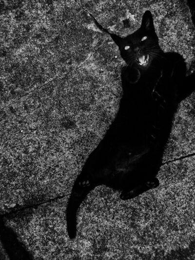 "Daido Moriyama, 'Cat, from ""Record 28 (Taipei)""', 2015"