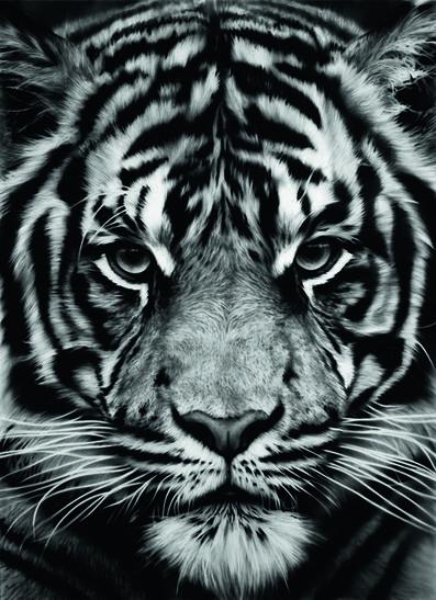 Robert Longo, 'Untitled (Tiger)', 2012