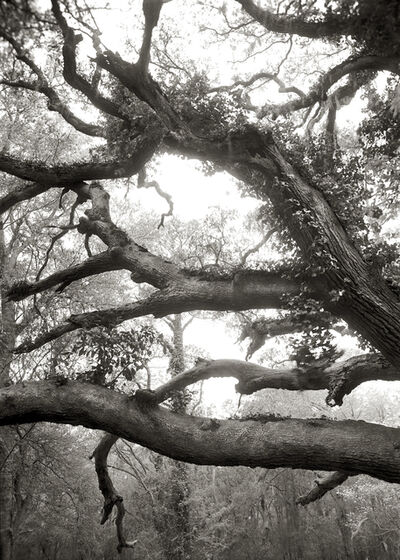 Linda Foard Roberts, 'Limbs, Over 100 Years Old', 2009