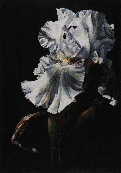 Rosie Sanders, 'Chiaroscuro II'