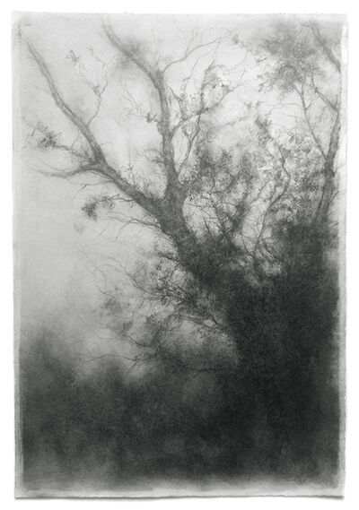 Sue Bryan, 'Tree Study', 2017