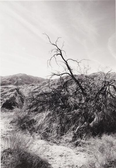 David Leslie Anthony, 'Solitude', ca. 2005