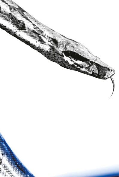 Mauricio Velez, 'Snake #46', 1997