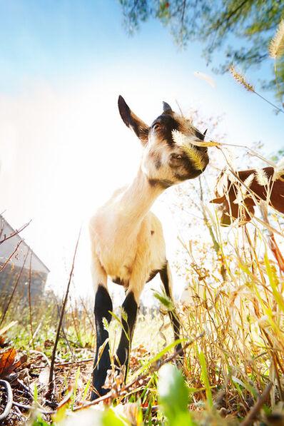 Shannon Greer, 'Goat', 2000-2018