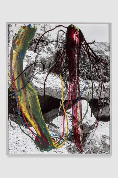 Sam Falls, 'Roots', 2016-2017