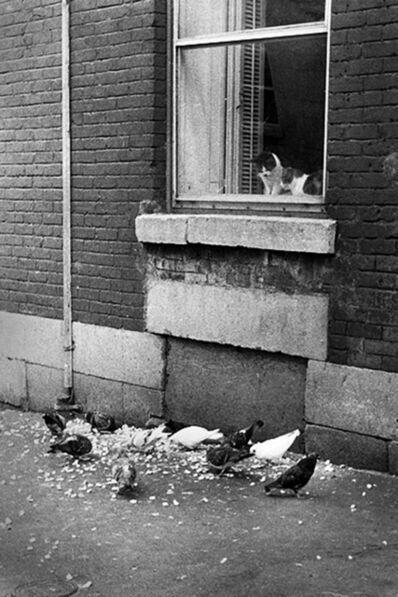 Réjean Meloche, 'Chats et Pigeons', 1975