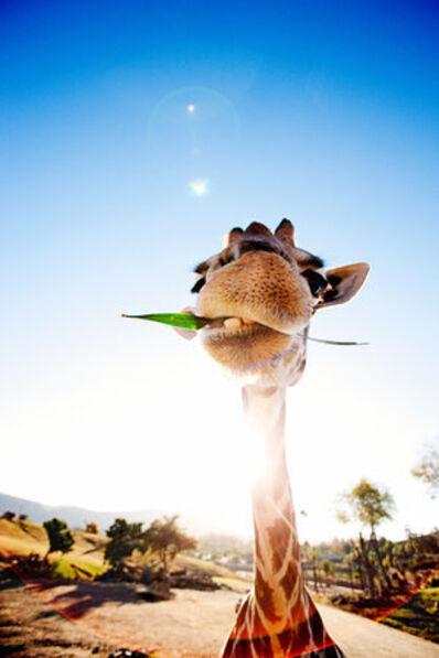 Shannon Greer, 'Gentle Giraffe', 2000-2018