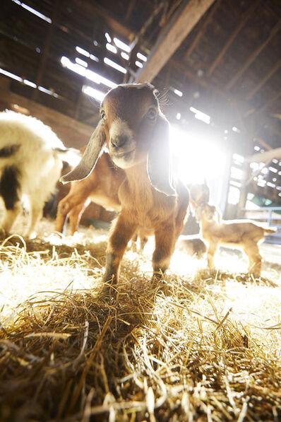 Shannon Greer, 'Baby Goat', 2019