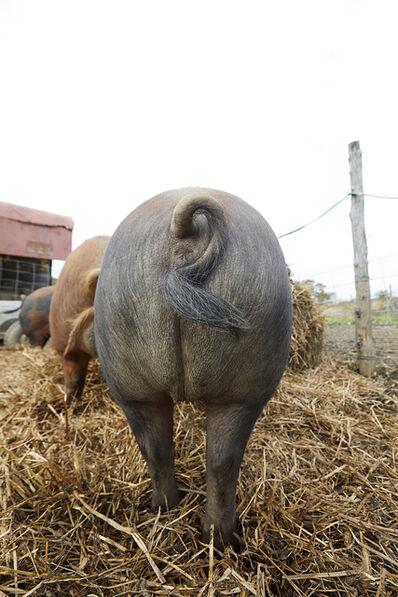 Shannon Greer, 'Pig Butt', 2018