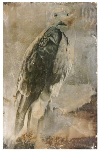 Johannes Brus, 'Seeadler', 2008