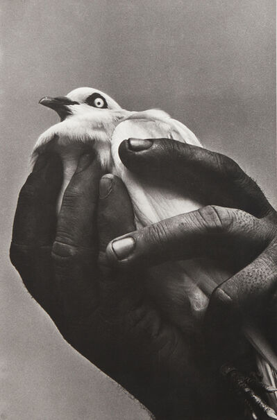 Harold Feinstein, 'Bird in Hand', 1955