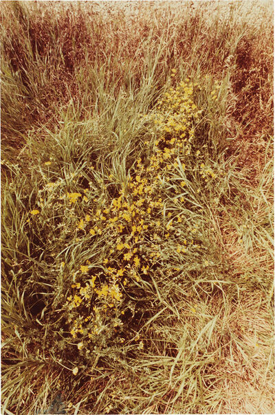 Ana Mendieta, 'Untitled: Silueta Series, Iowa'