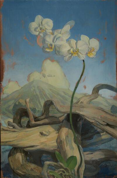 Benjamin J. Shamback, 'Orchids in Log Pile', 2018